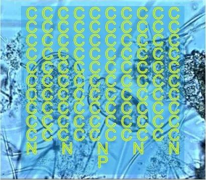 05.webp.jpg